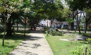 baoba-do-passeio-publico